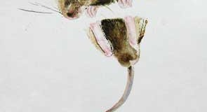 Rever de souris